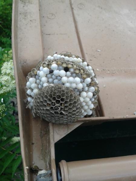 Das Nest innen