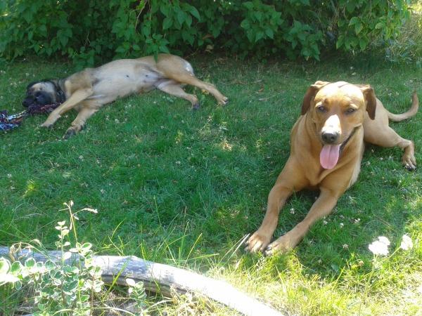 Die zwei Musterhunde ;-)