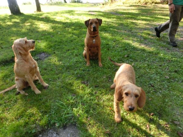 Senya, Maya und Wilda beim Treffen im September