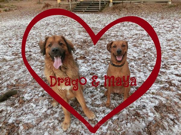 Drago_Maya